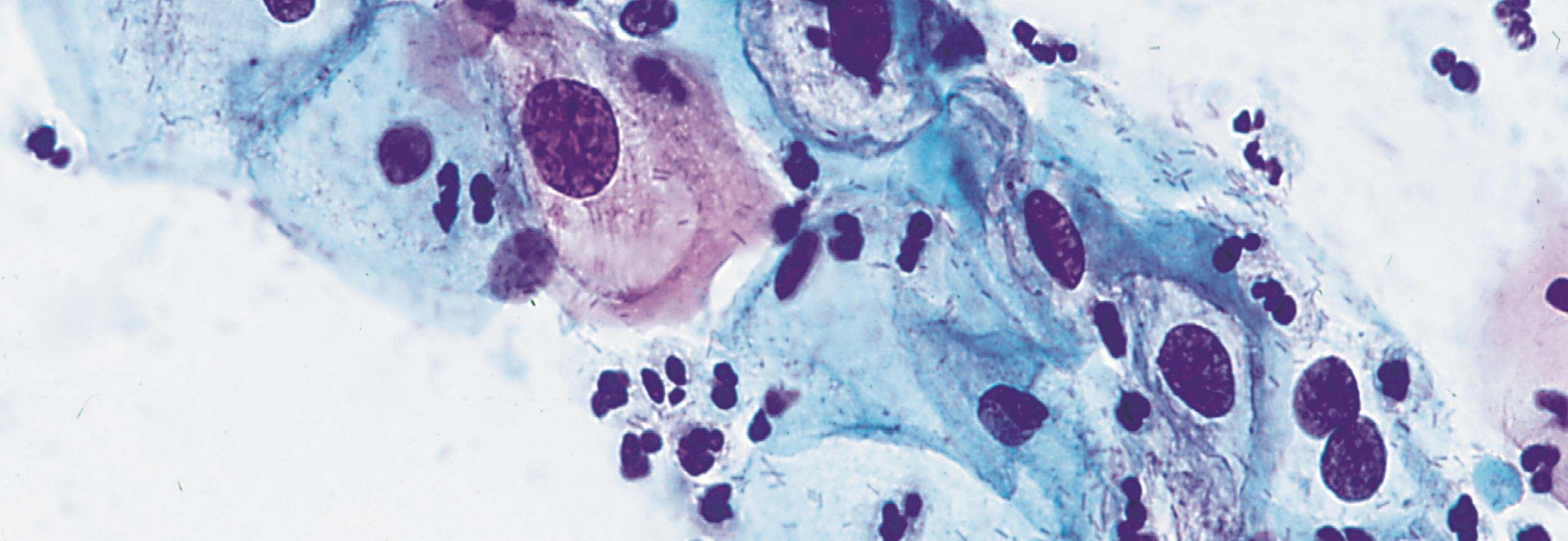 Zytologie