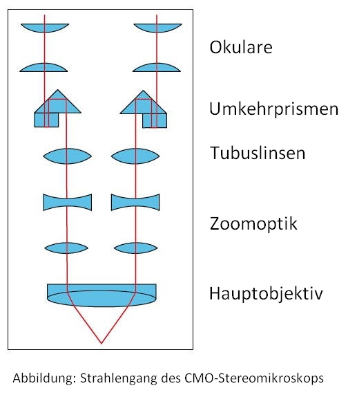 CMO Stereomikroskop Strahlengang